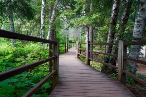 Hiking trails at Gooseberry Falls State Park